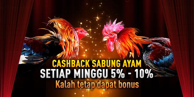 CASHBACK SABUNG AYAM
